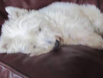 lazy dog by gvcspecks