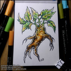 Sketchbook - Mandragora by Candra
