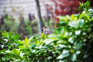 Little Sparrow by Soenanda