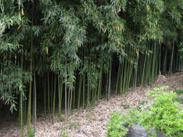 Bamboo 6 by Kamirose