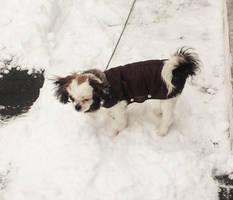 Futzy ist es kalt by PanHaukatze