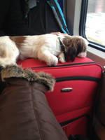 Futzy auf reise by PanHaukatze