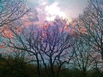 Bare Trees Touching a Scattered Sky by Beliar6
