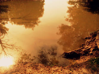 Withered Roots and  Waters of Reflected Trees by Beliar6