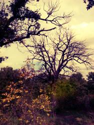 Autumn's last goodbye by Beliar6