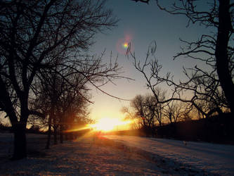 Apricity - the warmth of the sun in Winter... by Beliar6
