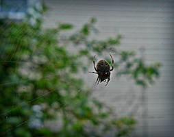 Tangled Web by carriepage