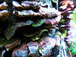 Polypores by carriepage