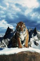 Tiger by gencebay55