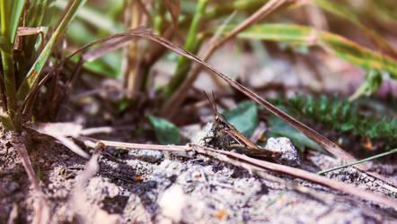 Grasshopper by CamillaSakar