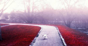 Mist by CamillaSakar