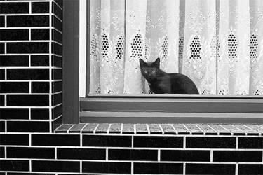 Badass cat by Reuno