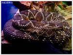 Snake II by Dark-Rose-Memories