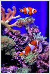 Finding Nemo by Dark-Rose-Memories