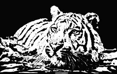 Tiger.. by ladyjart