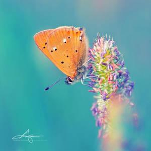 Orange Butty III by Stridsberg