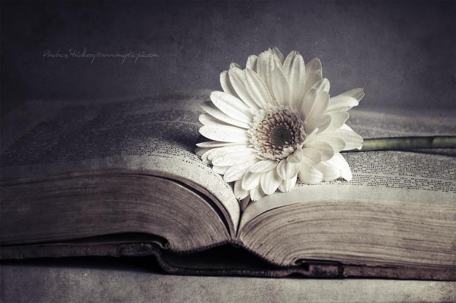 Poetry by Stridsberg