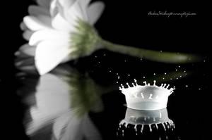 White Splash by Stridsberg