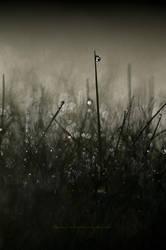Morning Dew - Part I by Stridsberg