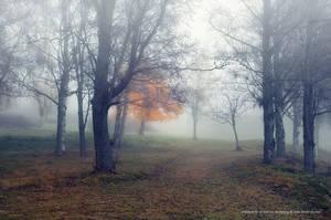 Misty Park by Stridsberg