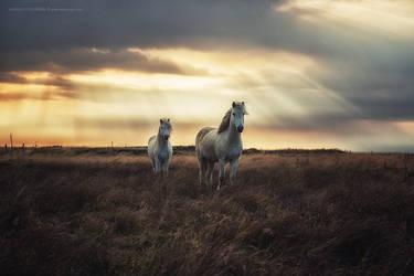 Hornless Unicorns by Stridsberg
