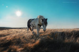 Icelands Pastures by Stridsberg