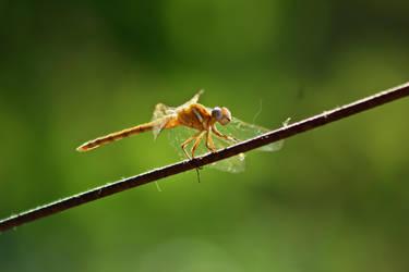 Bug On A Wire II by Harry-Paraskeva