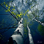 Spring is coming by Eredel