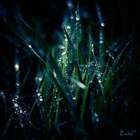 Magic Grass by Eredel