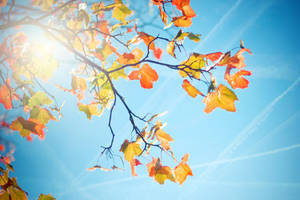 The First Breath of Autumn by Eredel