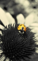 Ladybird II by MadRed