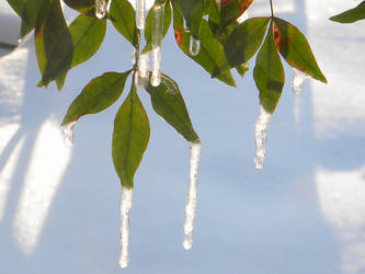 leaf icicles by flangeez