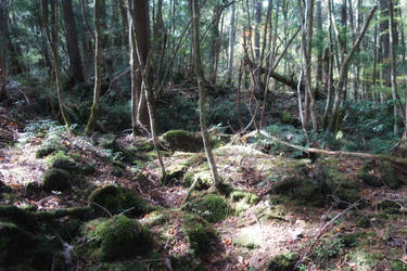 Aokigahara Forest by Offering
