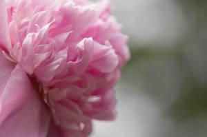 Pink2 by suprgrl1995