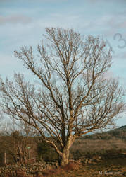 Lone Tree by magicmeg8