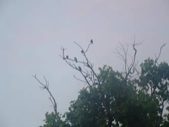 birdies by hellsion