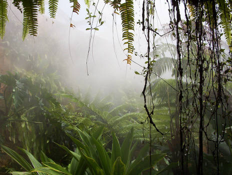 Background V - Jungle by BlooDoveStock