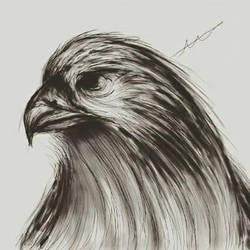 Digital Hawk sketch practice by xXEuterpexX