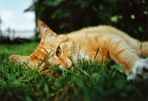 cat by lichtdieb