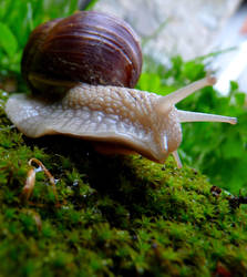 snail 1 by liberty-z