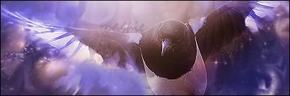 Magpie by StarkSCII