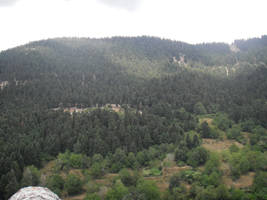 Forest by CrimsonAnaconda