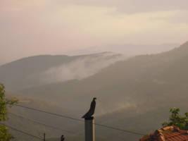 Forest With Fog by CrimsonAnaconda