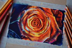 Prisma Vs Karisma Rose by mangakasan