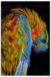 Feathered rainbow by mangakasan