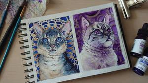 blue and violet by mangakasan
