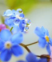 forget me not by e-claude
