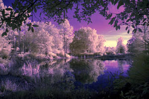 Violet Reflection by serenitypictures