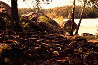 Swedish roots by kolibanat
