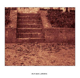 Autumn Leaves by Misantropia